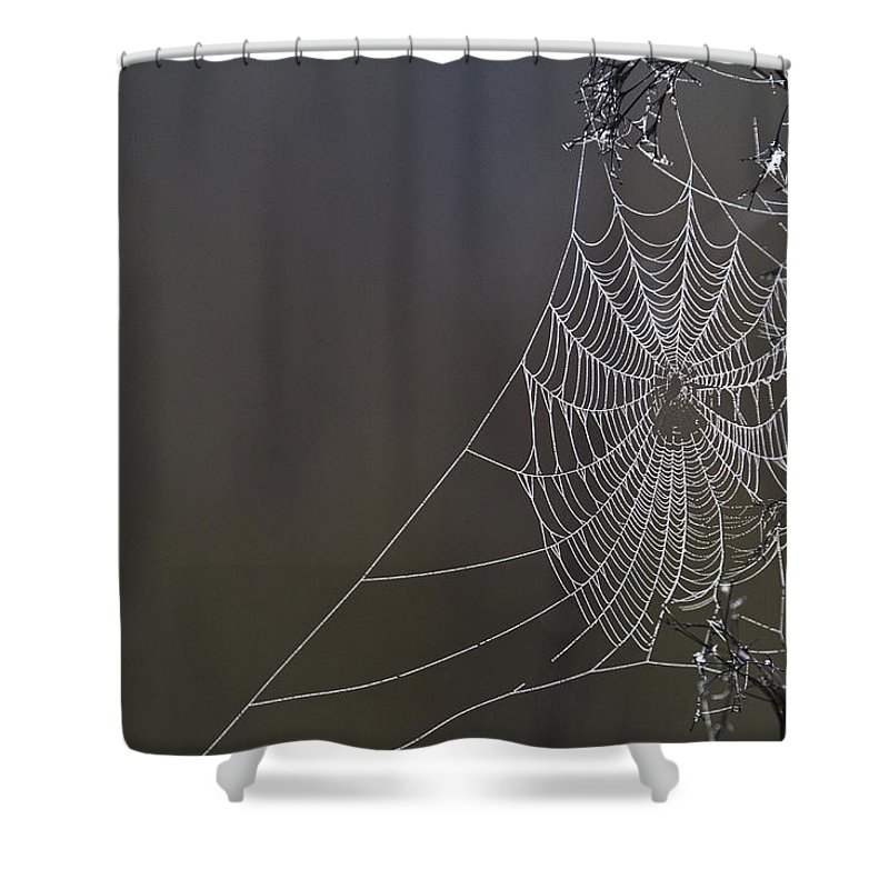 Light Shower Curtain featuring the photograph Spider Web Covered In Dew Drops by Robert Postma