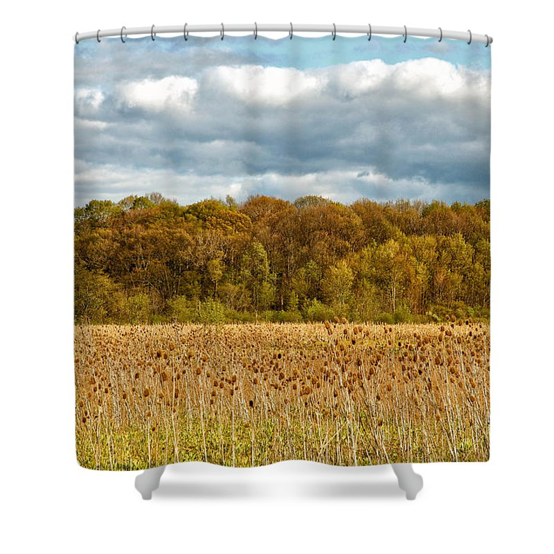 Spring Shower Curtain featuring the photograph Sprautumn by Rachel Cohen