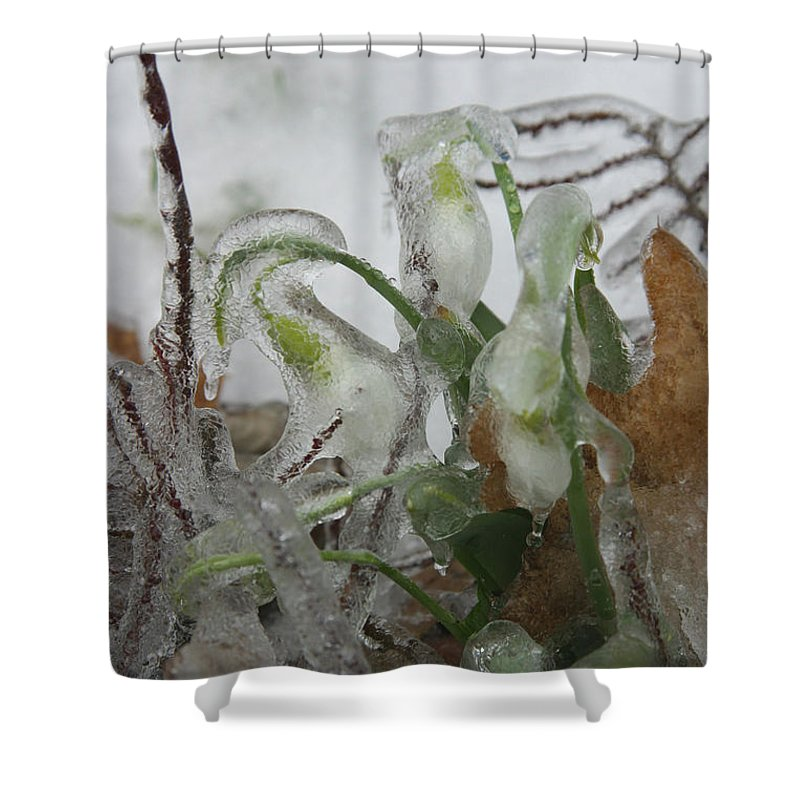 Weather Shower Curtain featuring the photograph Spring Flowers In Ice Storm by Ted Kinsman
