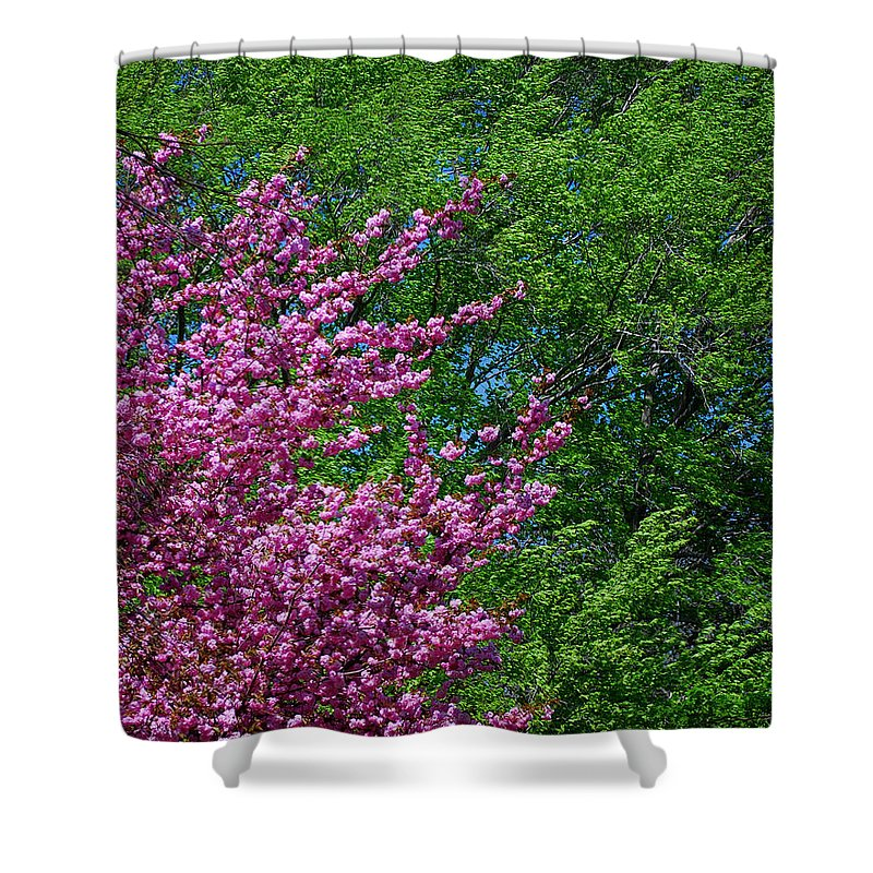 Seasons Shower Curtain featuring the photograph Springtime by Lisa Phillips