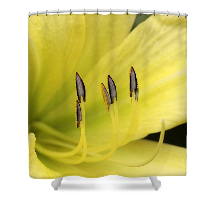 Shower Curtain featuring the photograph Standing Tall by Travis Truelove