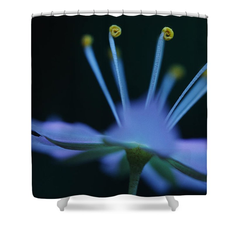 Light Shower Curtain featuring the photograph Starflower Trientalis Latifolia by Robert Postma