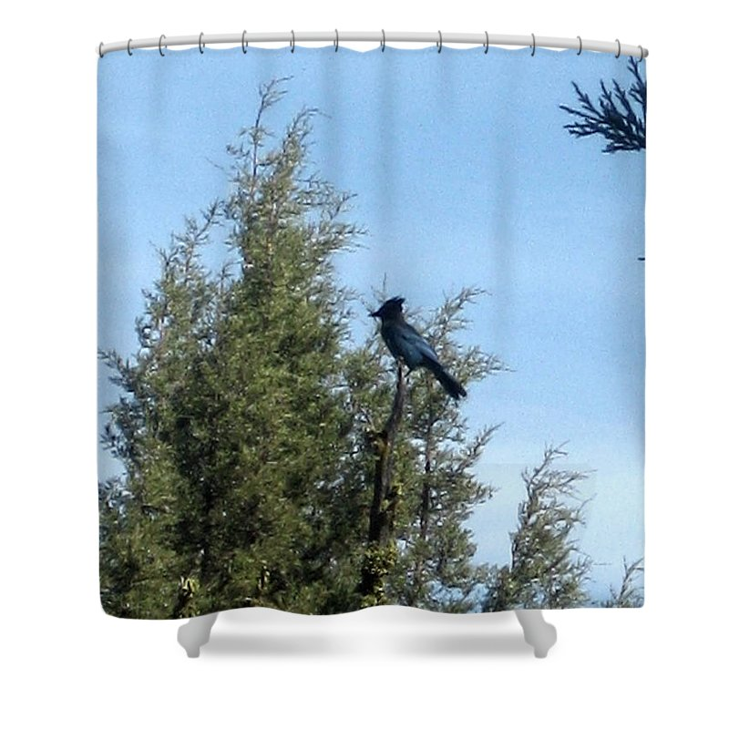 Jay Shower Curtain featuring the photograph Steller's Jay 2 by Linda Hutchins