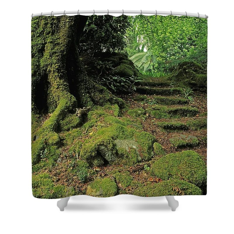 Bog Shower Curtain featuring the photograph Steps In The Wild Garden, Galnleam by The Irish Image Collection