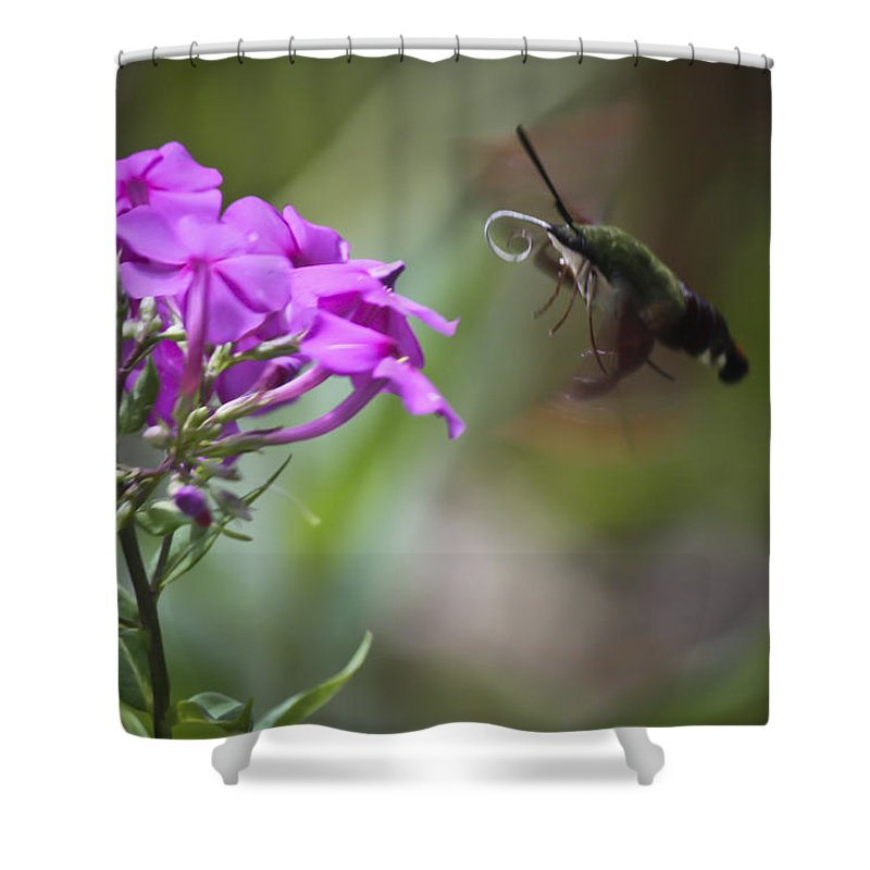 Sphingidae Shower Curtain featuring the photograph Stick Out Your Tongue by Teresa Mucha
