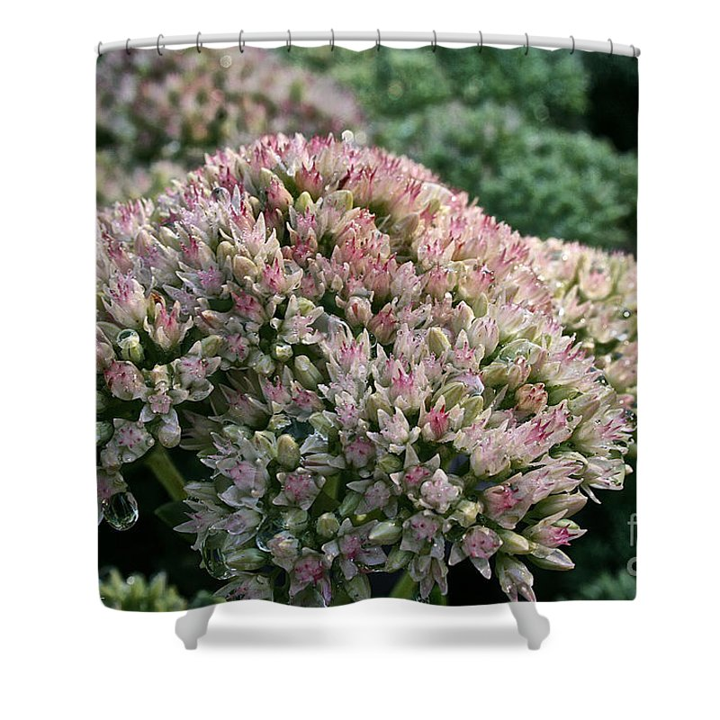 Outdoors Shower Curtain featuring the photograph Stonecrop by Susan Herber