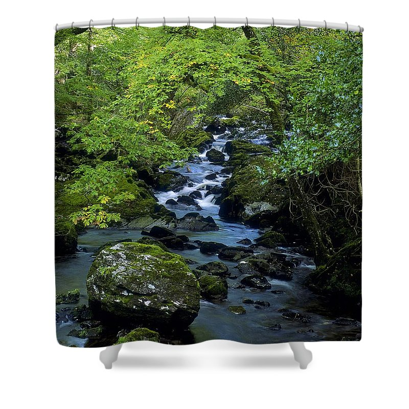 Branch Shower Curtain featuring the photograph Stream Flowing Through A Forest by The Irish Image Collection