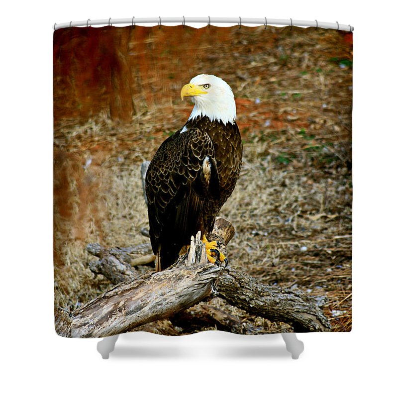 Eagle Shower Curtain featuring the photograph Strong Survivor by Toni Hopper
