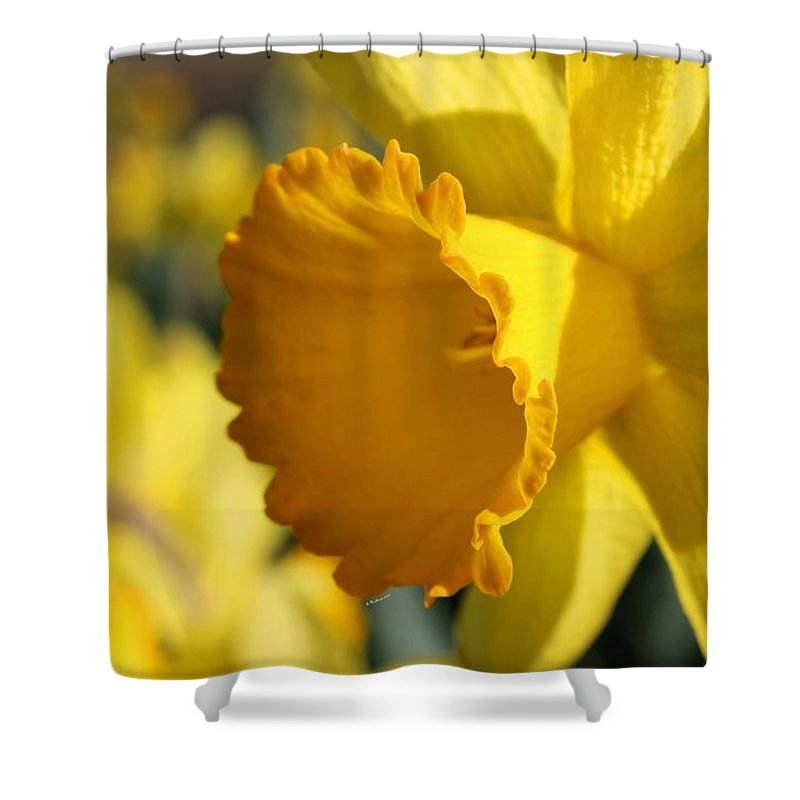 Daffodil Shower Curtain featuring the photograph Stylin' An Profilin' by Betty Northcutt