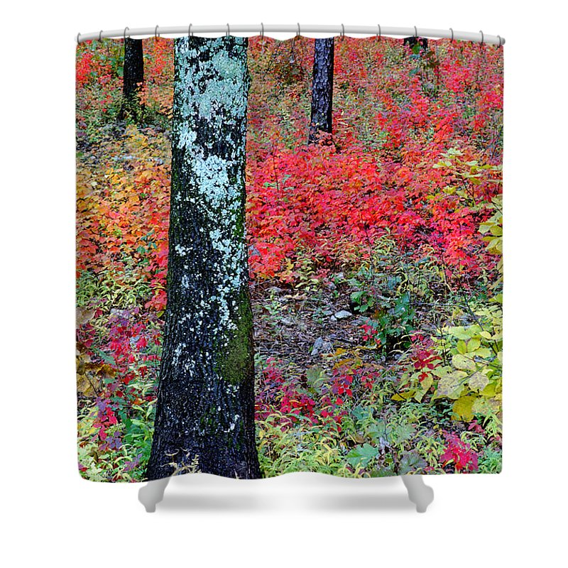 Autumn Scene Shower Curtain featuring the photograph Sumac Slope And Lichen Covered Tree by Greg Matchick