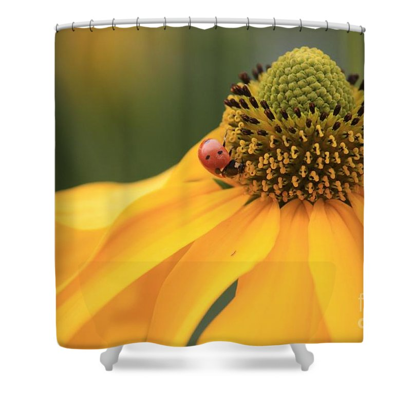 Ladybug Shower Curtain featuring the photograph Summer Beauty by Carol Groenen