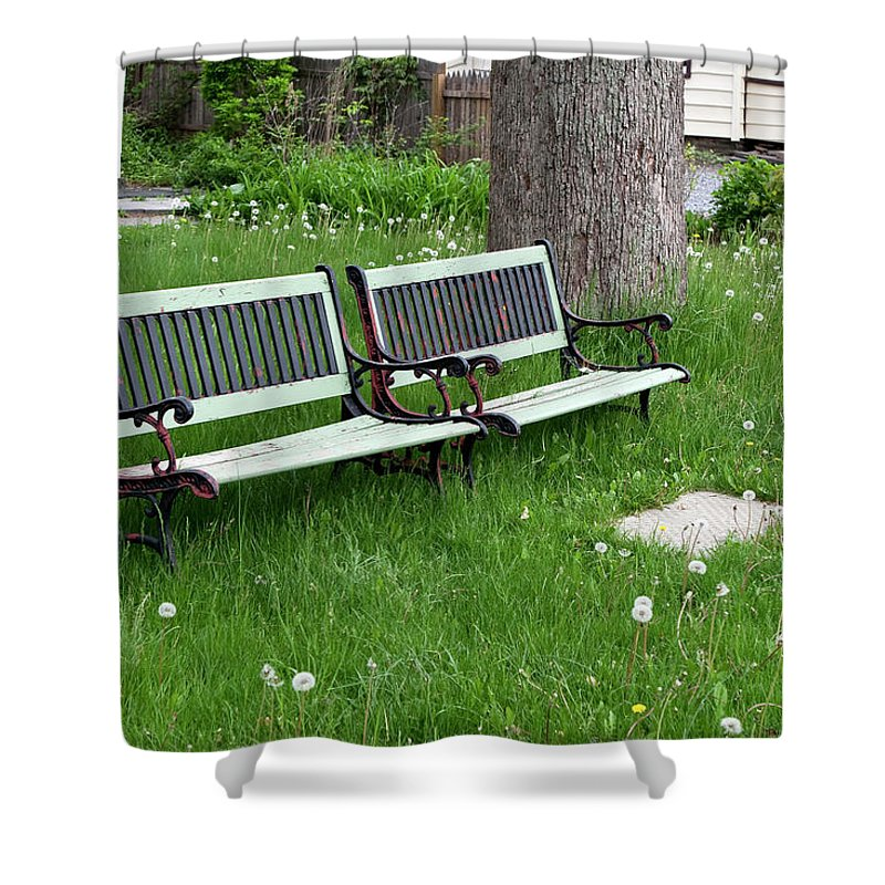 Benches Shower Curtain featuring the photograph Summer Bench And Dandelions by Lorraine Devon Wilke