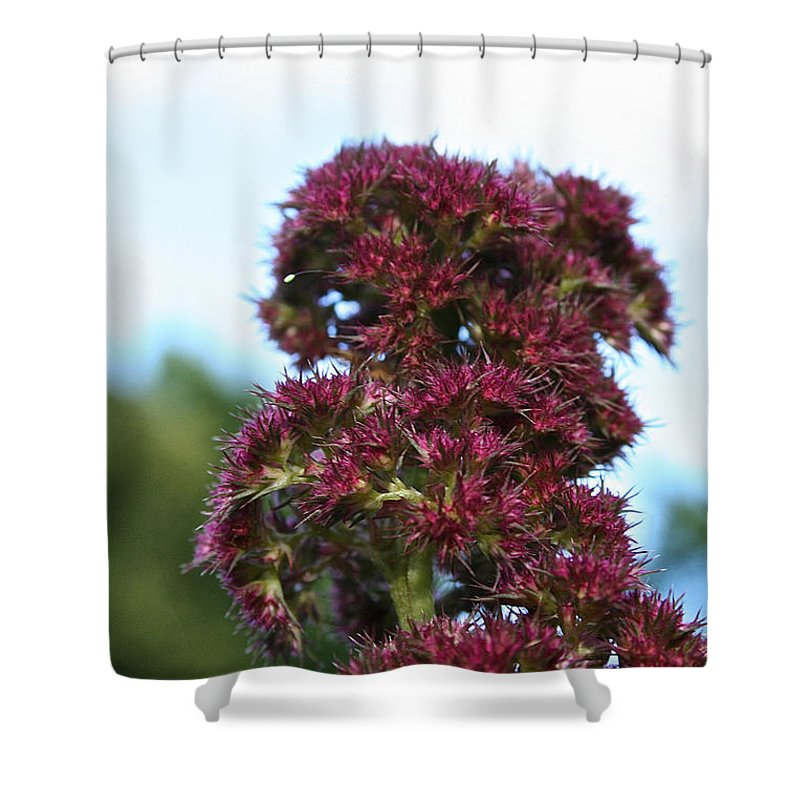 Outdoors Shower Curtain featuring the photograph Summer Scenery by Susan Herber