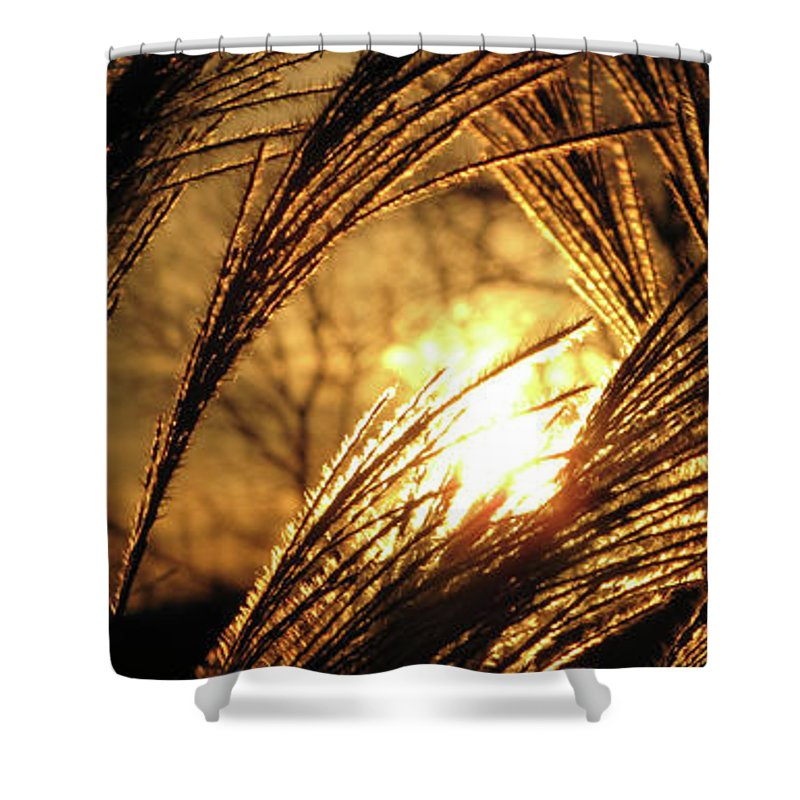 Sunset Shower Curtain featuring the photograph Sun In Grass Panoramic by Amy Tyler