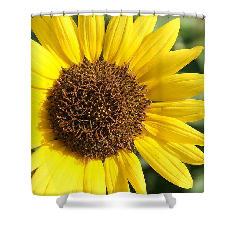 Sunflower Shower Curtain featuring the photograph Sunflower by Alan Hutchins