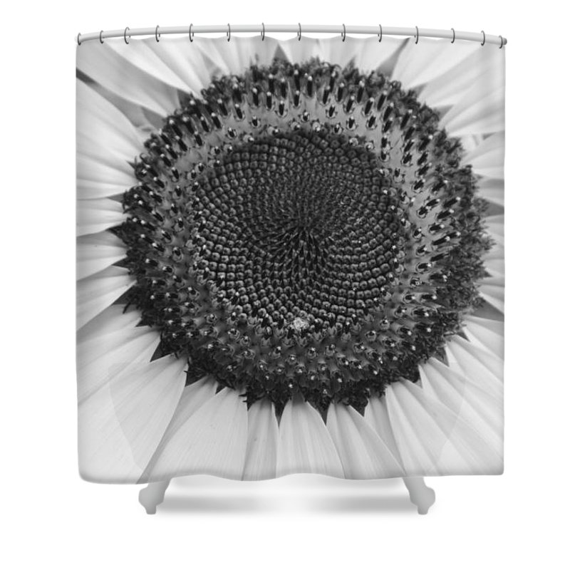 Floral Shower Curtain featuring the photograph Sunflower Center Black And White by James BO Insogna