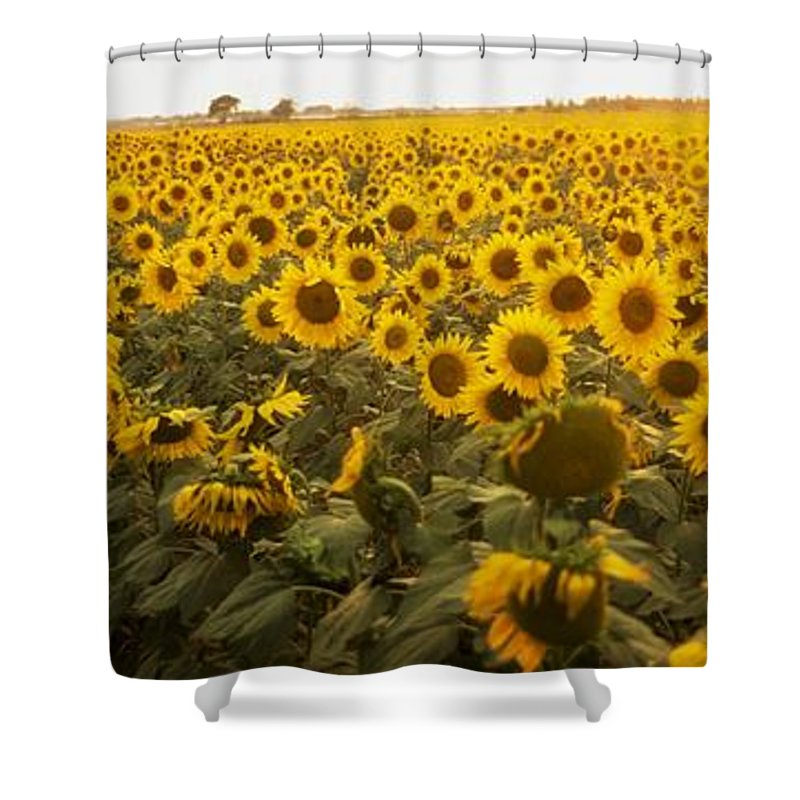 Color Shower Curtain featuring the photograph Sunflower Field by The Irish Image Collection