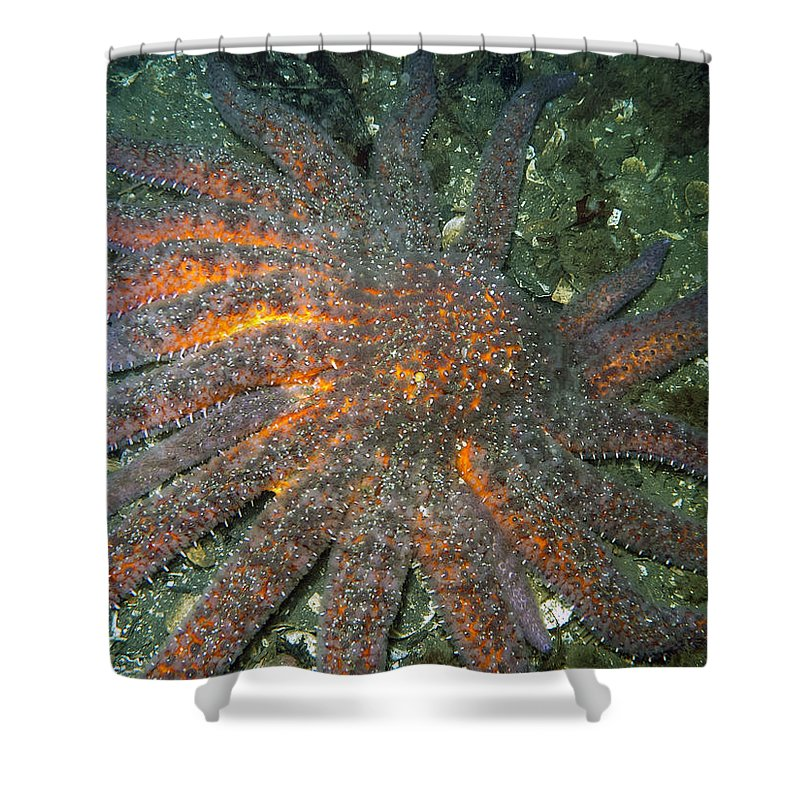 Sunflower Star Shower Curtain featuring the photograph Sunflower Star by Derek Holzapfel