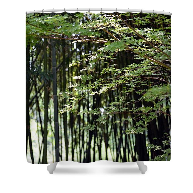 Sunlit Shower Curtain featuring the photograph Sunlit Bamboo by Maria Urso