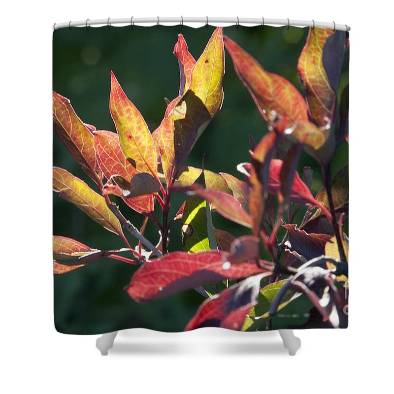 Leaves Shower Curtain featuring the photograph Sunlit Leaves by Darleen Stry