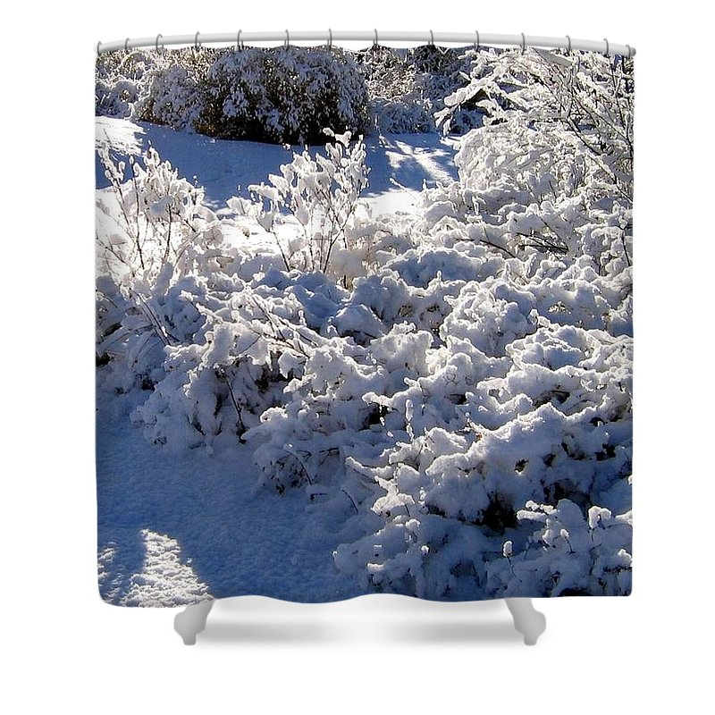 Sunlit Shower Curtain featuring the photograph Sunlit Snowy Sanctuary by Will Borden