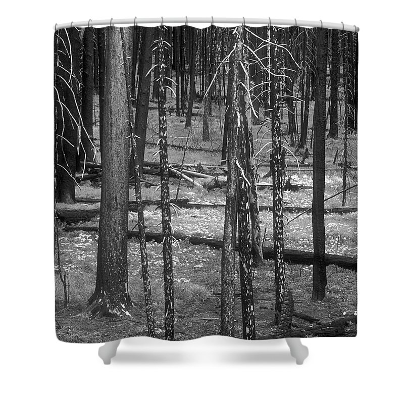 Shower Curtain featuring the photograph Recovery by Sandra Bronstein