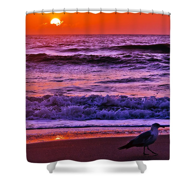 Florida Shower Curtain featuring the photograph Sunrise Sea And Seagull by Roger Wedegis