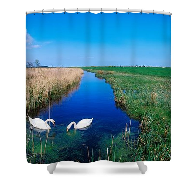 Birds Shower Curtain featuring the photograph Swans On Bog, Near Newcastle, Co by The Irish Image Collection