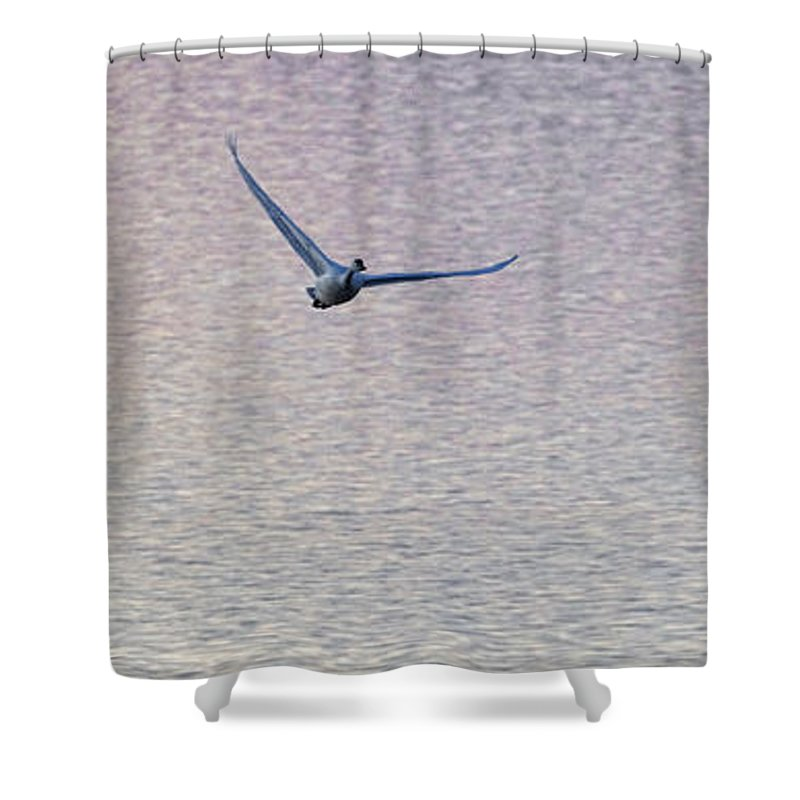 Light Shower Curtain featuring the photograph Swans Taking Off From Tagish River by Robert Postma