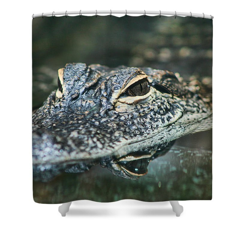 Alligator Mississippiensis Shower Curtain featuring the photograph Sweet Baby Alligator by Kathy Clark