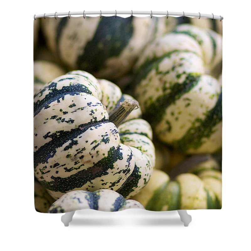 Sweet Dumpling Shower Curtain featuring the photograph Sweet Dumpling Squash by Brooke Roby