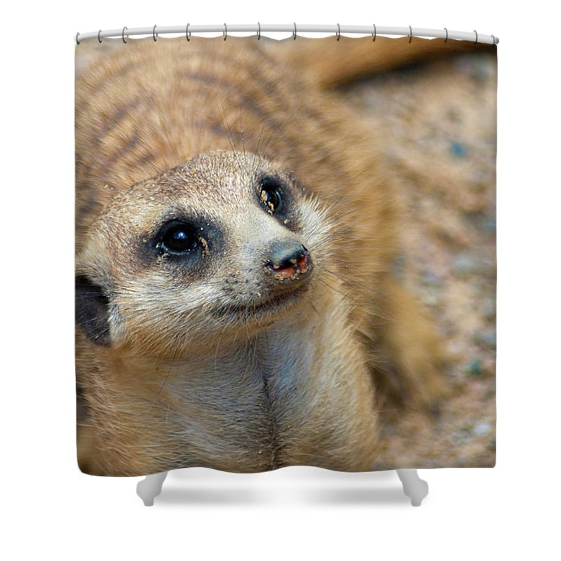 Meerkat Shower Curtain featuring the photograph Sweet Meerkat Face by Carolyn Marshall