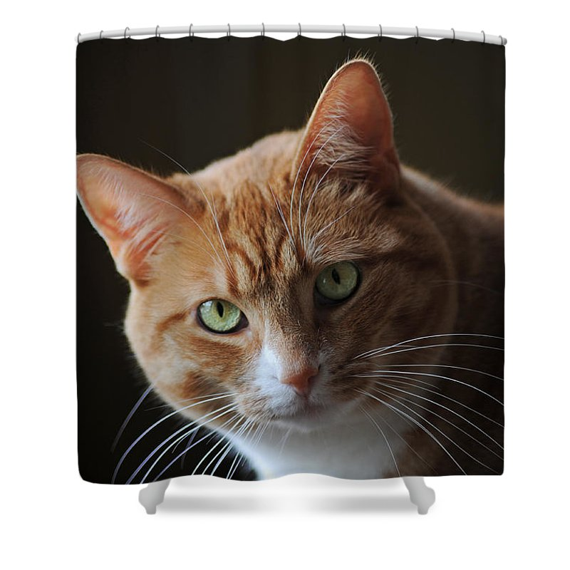 Cat Shower Curtain featuring the photograph Tabby Cat by Elaine Mikkelstrup