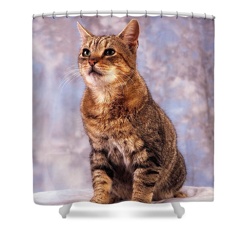 Color Shower Curtain featuring the photograph Tabby Cat Portrait Of A Cat by The Irish Image Collection