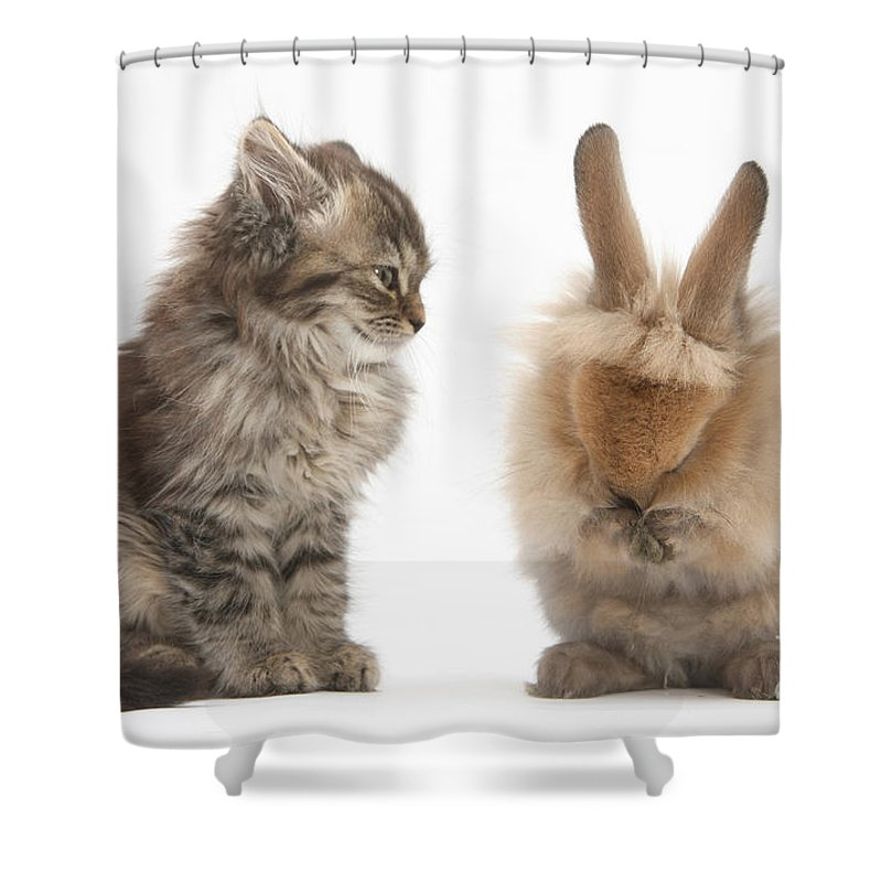 Nature Shower Curtain featuring the photograph Tabby Kitten With Young Rabbit, Grooming by Mark Taylor