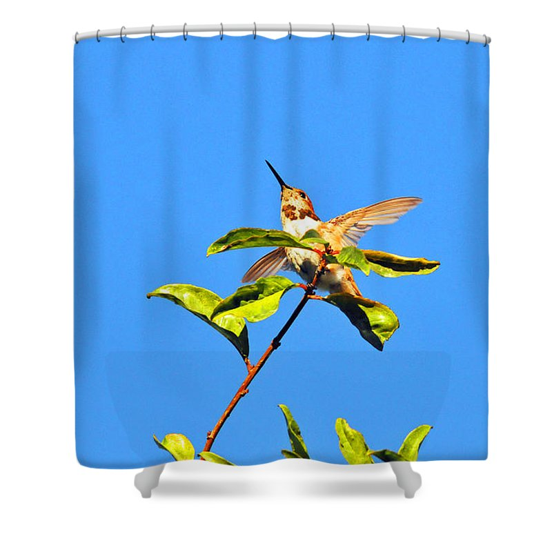 Hummers Shower Curtain featuring the photograph Take Off by Lynn Bauer