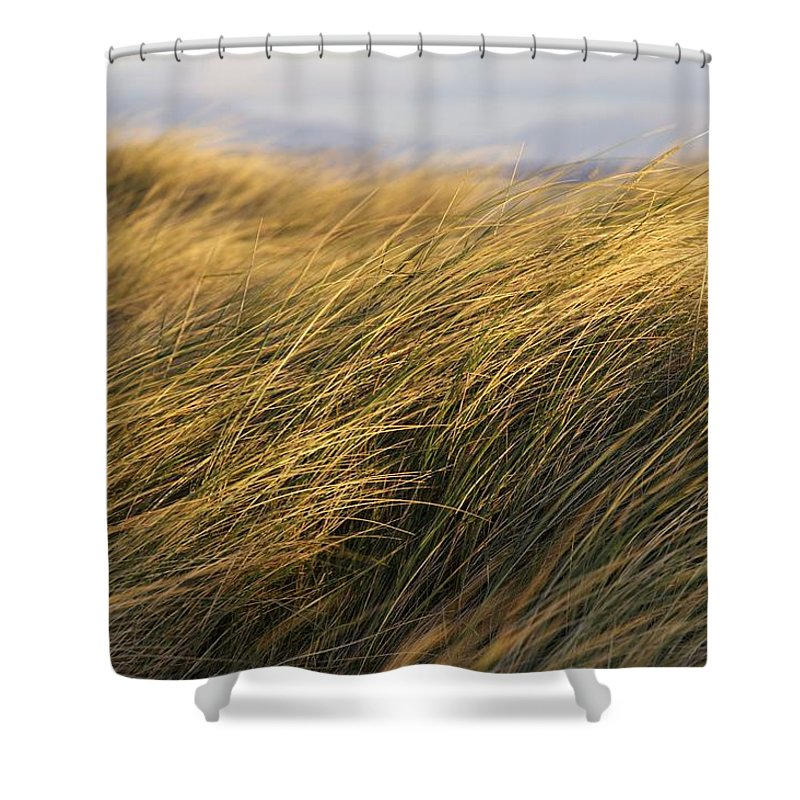 Bending Shower Curtain featuring the photograph Tall Grass Blowing In The Wind by Peter McCabe