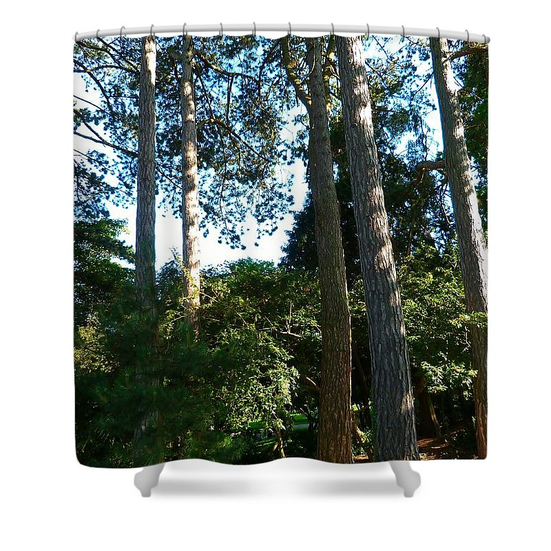 Trees Shower Curtain featuring the photograph Tall Trees by Andrew Read