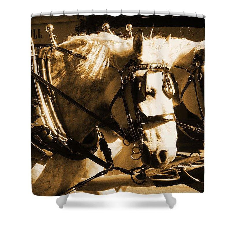 Horse Shower Curtain featuring the photograph Team Work by Hannah Breidenbach