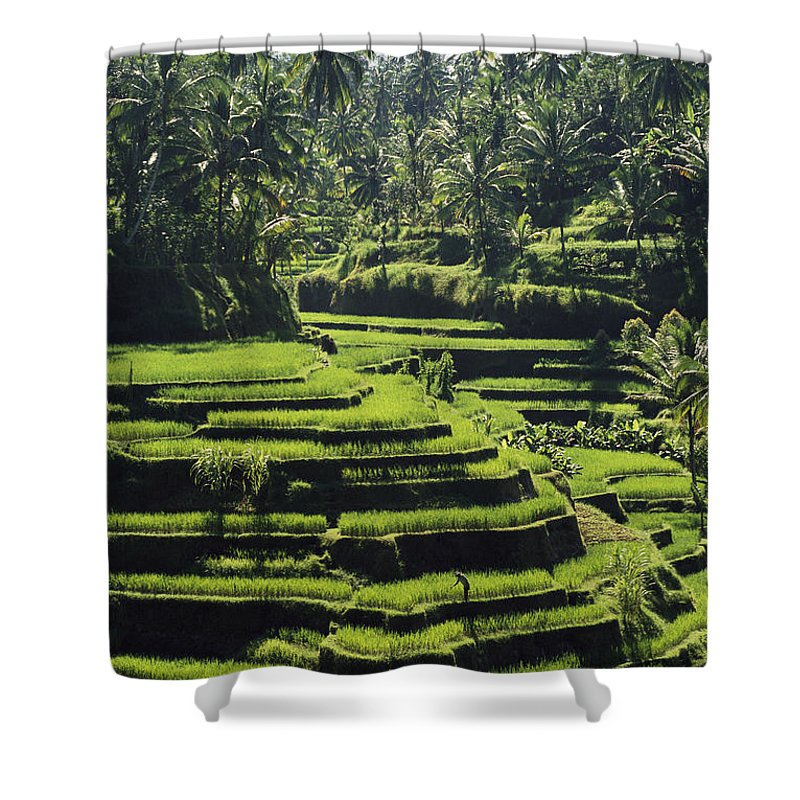 Asia Shower Curtain featuring the photograph Terraced Rice Fields On Bali Island by Paul Chesley