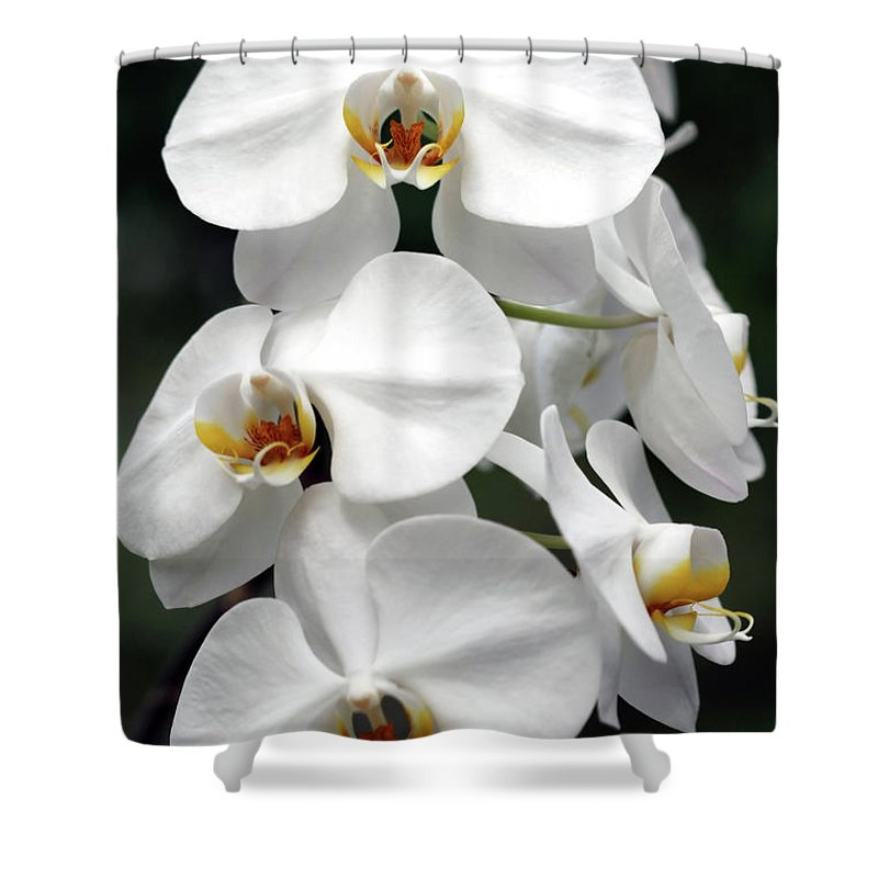 Orchids Shower Curtain featuring the photograph The Beauty Of Orchids by Ken Frischkorn