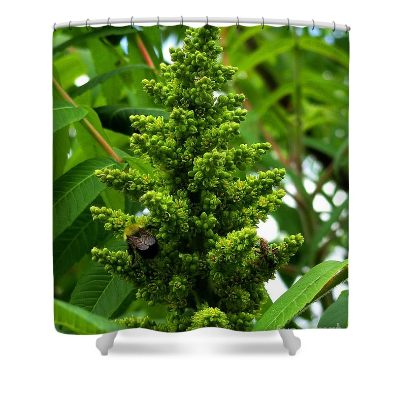 Connecticut Shower Curtain featuring the photograph The Bee Chases The Fly? by Meandering Photography