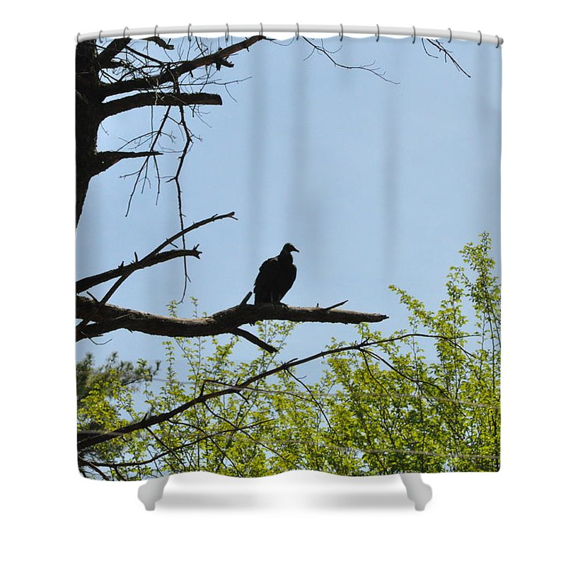 The Buzzard Is Two Faced Shower Curtain featuring the photograph The Buzzard Is Two Faced by Bill Cannon
