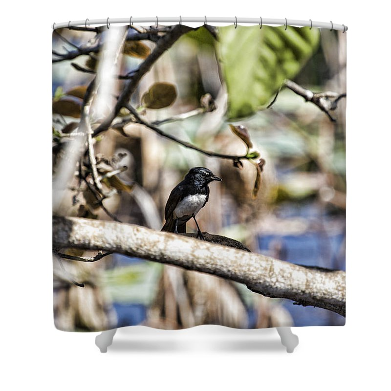 Willy Wagtail Shower Curtain featuring the photograph The Color Behind Me by Douglas Barnard