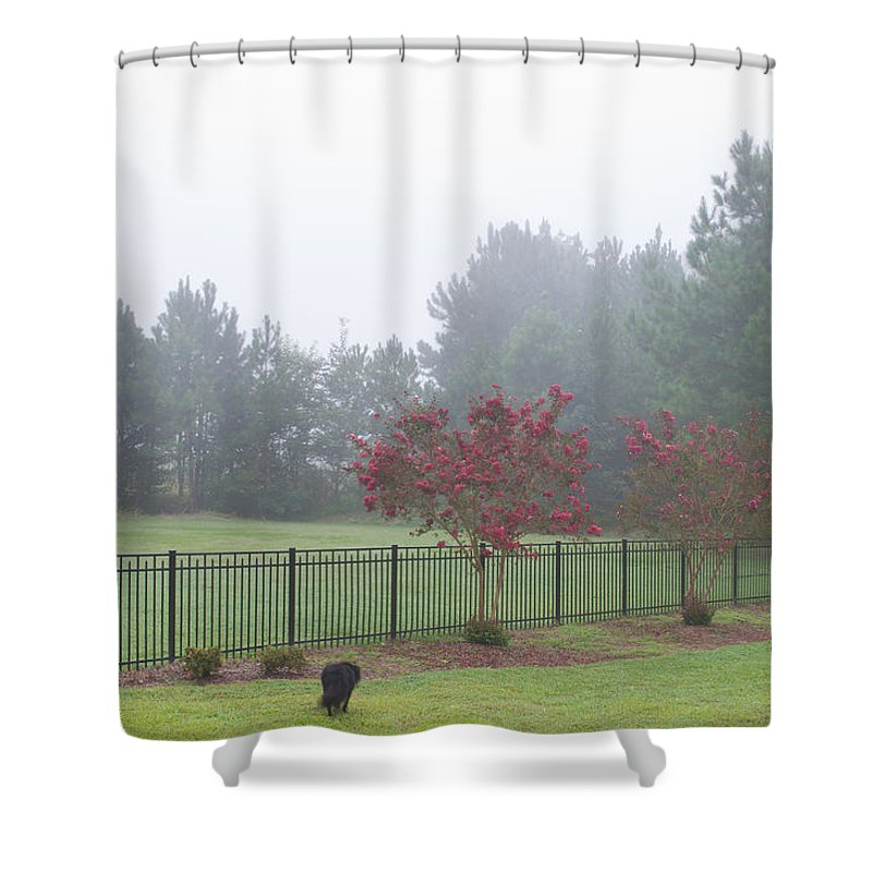 Nature Shower Curtain featuring the photograph The Curious Dog by Paulette B Wright