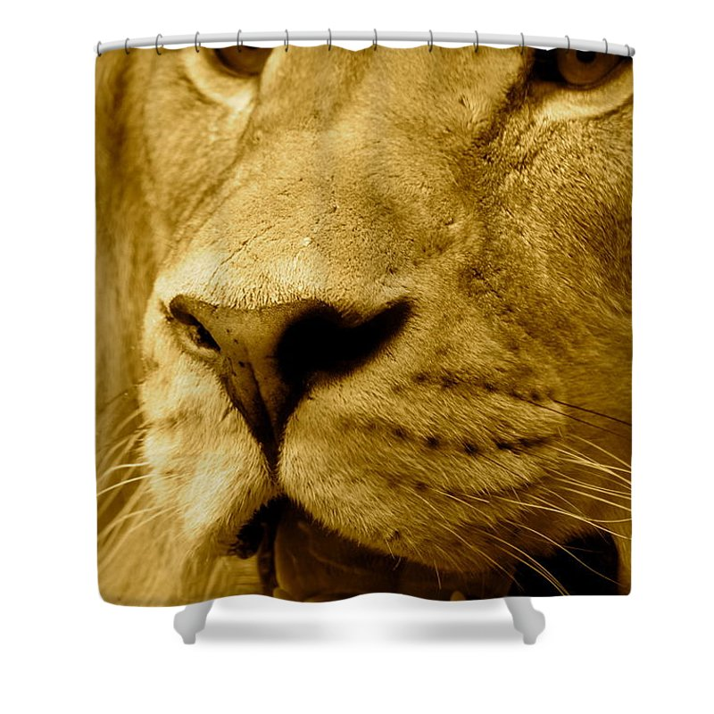 God Shower Curtain featuring the photograph The Face Of God In Sepia Tones by Laddie Halupa