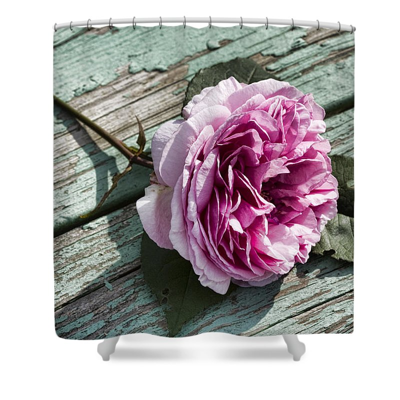 English Shower Curtain featuring the photograph The Fallen Rose by Kathy Clark
