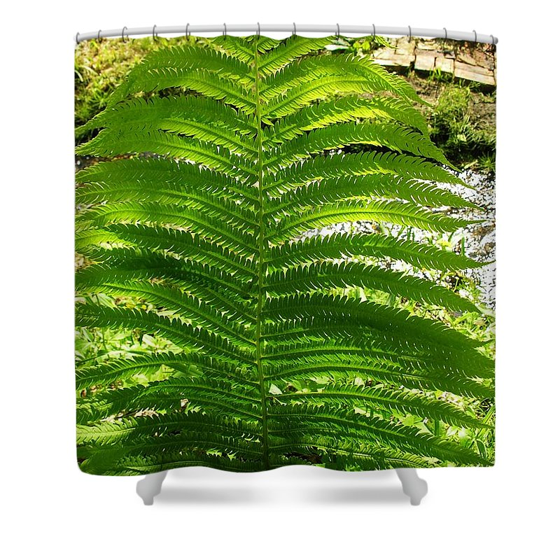 Fern Shower Curtain featuring the photograph The Fern by Sherman Perry