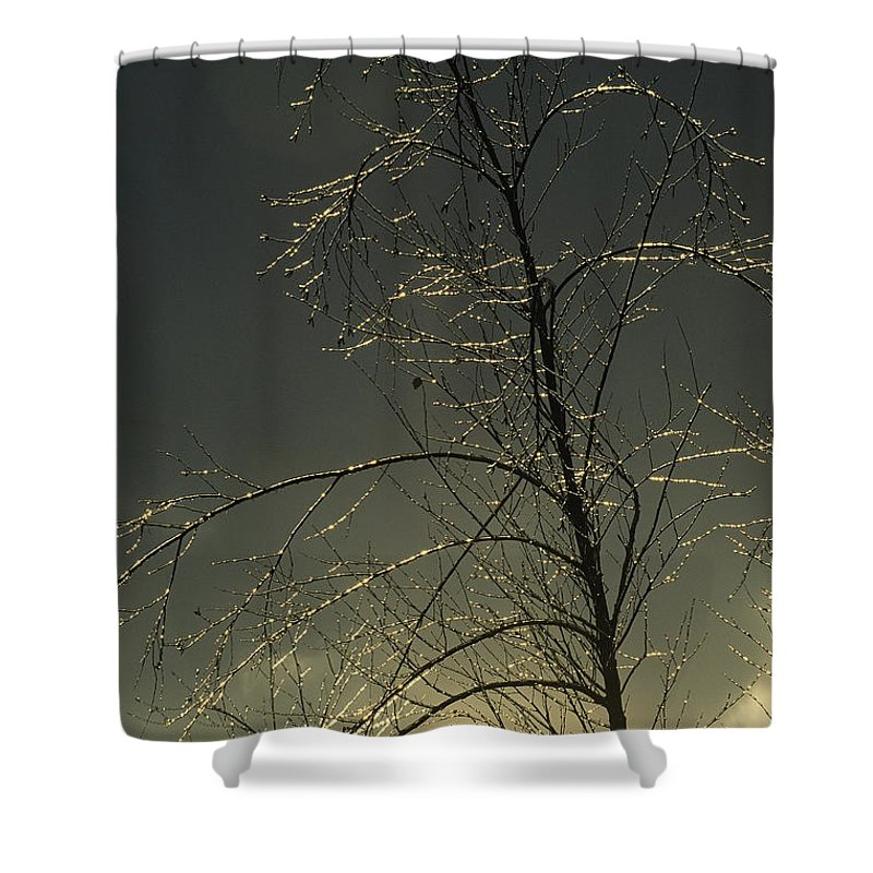 North America Shower Curtain featuring the photograph The Frozen Branches Of A Small Tree by Raymond Gehman