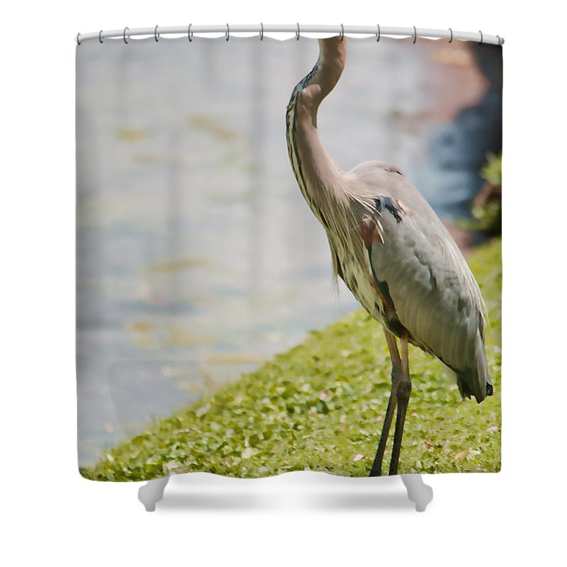 Bird Shower Curtain featuring the photograph The Great Blue Heron by Donna Greene